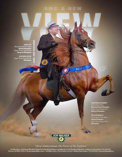 Home | The Saddle Horse Report